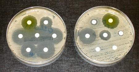 Antibiotic Sensitvity And Resistance