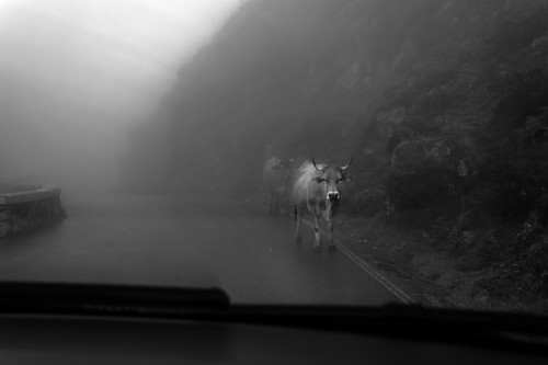 Nuevo método para hacer fotografías en blanco y negro con ayuda de las máscaras de luminosidad (I)