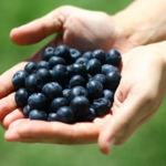 Cinco alimentos buenos para evitar o mitigar los efectos de la cistitis
