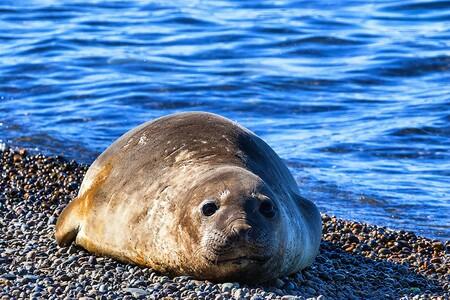 Alguien está disparando a lobos marinos en Baja California, México: los matan para sacarlos de redes de pesca, según Excelsior