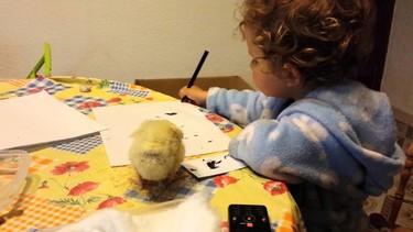 """""""La que has 'liao' pollito"""": las graciosas aventuras de una niña cuyo pollito no le deja estudiar"""