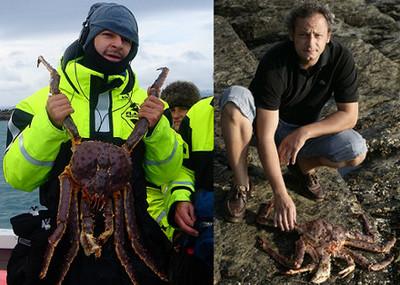 Cangrejo Rojo Real, una exquisitez de los mares de Noruega