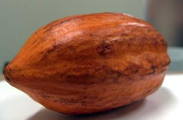 Cacao contaminado con ocratoxina en España