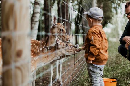 Nino Zoo