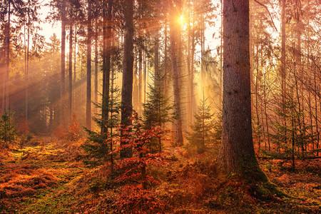 11 escapadas con encanto para este otoño con las que disfrutar de la naturaleza