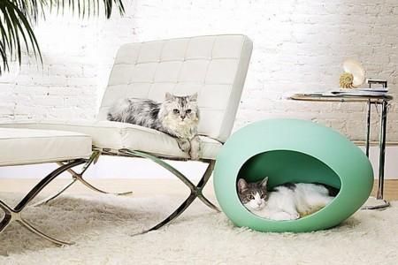 Refugio Gato