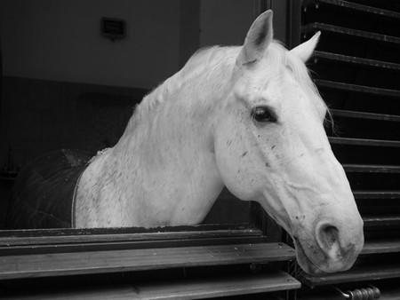 Lumix GF6 blanco y negro