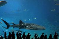 Los mejores acuarios del mundo: la ruta del tiburón (I)