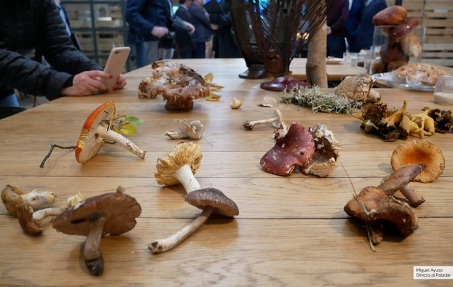Solo dos de estas setas son comestibles: cómo distinguir sin dudas las especies culinarias entre una mayoría de hongos tóxicos