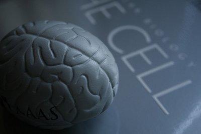 La estimulación temprana podría hacer variar el cociente intelectual en la adolescencia