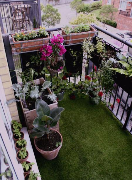 Balcon Plantas 5