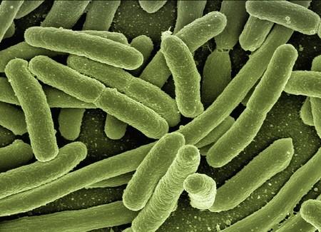 Tu verdadera edad se puede determinar por las bacterias que hay en tu intestino