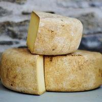 3.200 años comiendo queso: el sorprendente papel del lácteo en la evolución humana