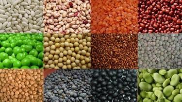 Alimentos para adultos mayores. Leguminosas. Tercera parte