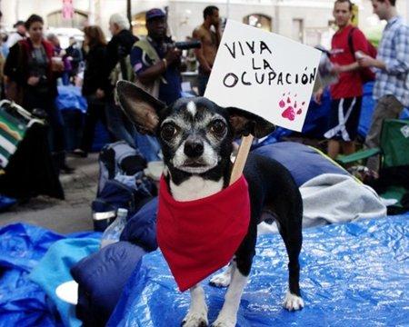 Twitter planta cara al Fiscal que quiere acceder a las cuentas de los indignados de Occupy Wall Street
