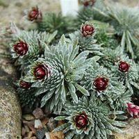 Por primera vez, se encuentran grandes cantidades de este raro mineral en plantas
