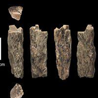 Neandertales y denisovanos no solo practicaban sexo entre ellos, tenían hijos: esta chica es la prueba