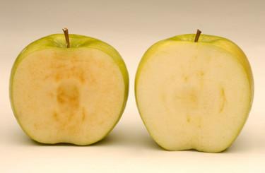 Manzanas que no se oxidan al cortarlas, reavivando el debate en torno a los transgénicos en EEUU