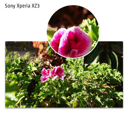 Sony Xperia Xz3 Macro Dia 01 Detalle