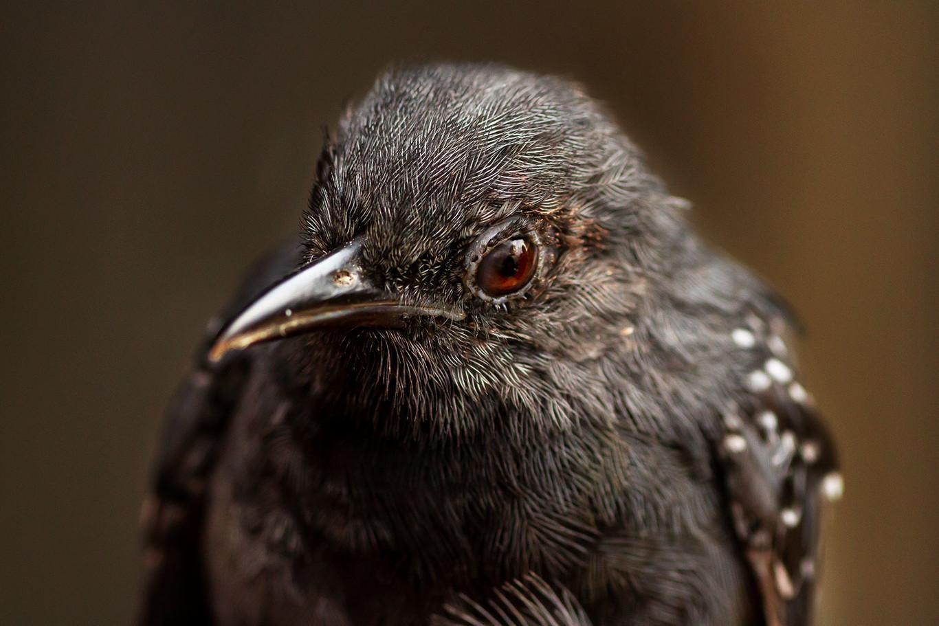 Explorando estilos fotográficos: la fotografía de aves como método para aprender disciplina y planificación