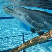 """Los """"robodelfines"""" son una realidad, cuestan 22M de euros y son la esperanza cruelty-free para los acuarios"""
