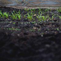 Ya puedes fertilizar tomates con tu cadáver (o casi): el estado norteamericano de Washington aprueba el compostaje de seres humanos