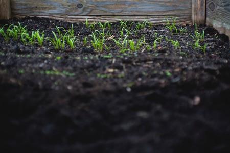 Ya casi puedes fertilizar tomates con tu cadáver: el estado norteamericano de Washington aprueba el compostaje de seres humanos