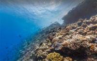 Cómo seguir viendo los océanos si Google Street View no ha sido suficiente para ti