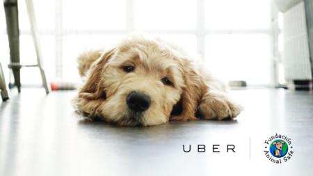 UberPET es el nuevo servicio de trasporte de mascotas para Cali