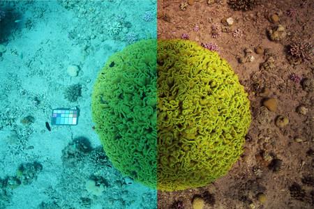 'See-thru': una inteligencia artificial desarrollada para obtener un color perfecto en fotografía subacuática
