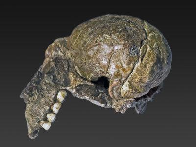 Los huesos que nos enseñaron que veníamos de África