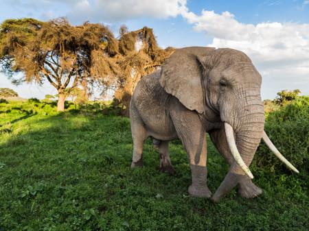 Kenya Amboseli Elephant Safari 90293 990x742