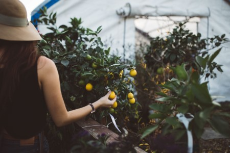 La guía fácil para cultivar tus propias frutas y verduras sin mucho esfuerzo