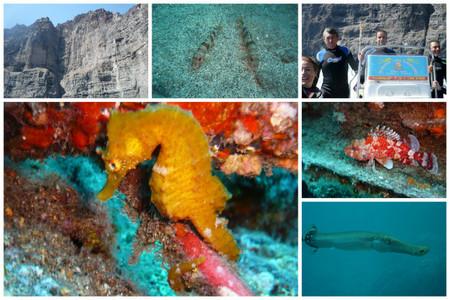 caballito-mar-tenerife-marina-gigantes