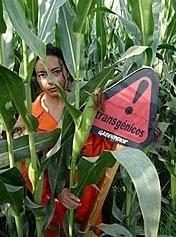 ¿Da la Unión Europea luz verde a alimentos transgénicos peligrosos?