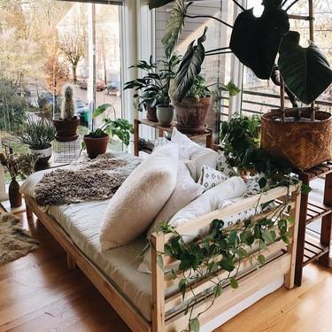 En Amazon también puedes comprar plantas: nueve de diferentes estilos para regalar a tu hogar un extra de vida