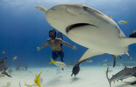 'Tiburón, en las garras del hombre'. No es tan fiero como lo pintan