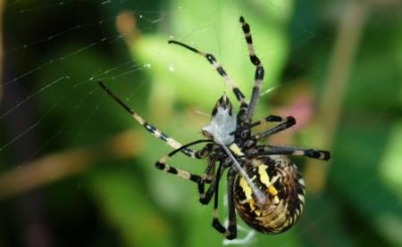 Si puede detener un tren, la seda de araña está lista para el mercado