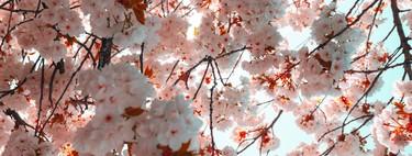 Celebra la floración de los cerezos japoneses con estos perfumes