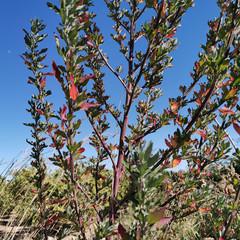 Foto 28 de 70 de la galería huawei-p30-pro-fotografia en Xataka