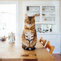 Hay gente que está alimentando a sus mascotas con comida vegana. Y para los gatos es un problema