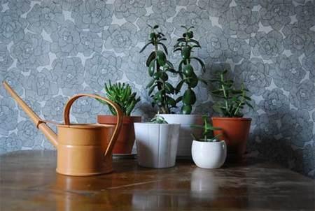 Una buena idea: agrupar las plantas