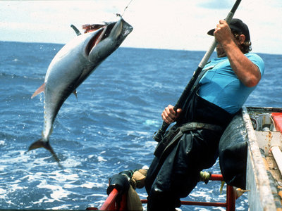 El pescado sostenible es malo para el medio ambiente
