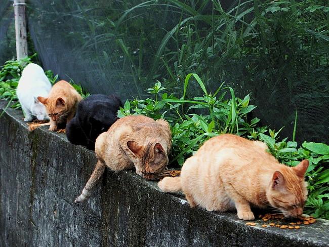 Stray Cats Panoramio 1