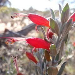 Foto 3 de 22 de la galería colores-del-gran-desierto-de-victoria en Xataka Ciencia