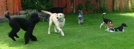 Royvon Pet Hotel es un hotel de cinco estrellas para perros