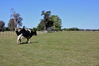 La ruta del queso en Argentina
