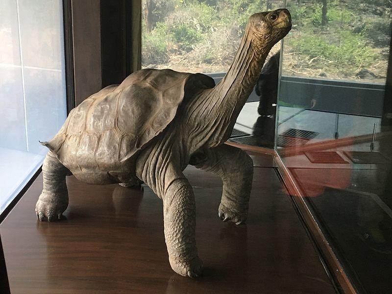 Los españoles que buscan en el ADN de las tortugas el secreto de la longevidad