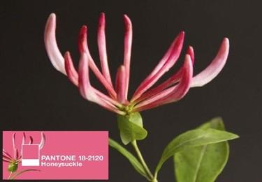 Según Pantone, 2011 ya tiene su color: madreselva