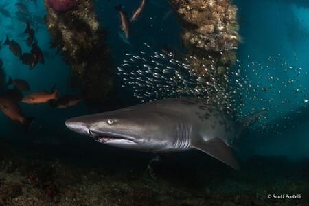 Scott Portelli Threatened Species Winner